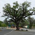 HPX Hanging Tree (2)