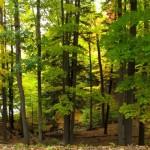 durand-eastman-park